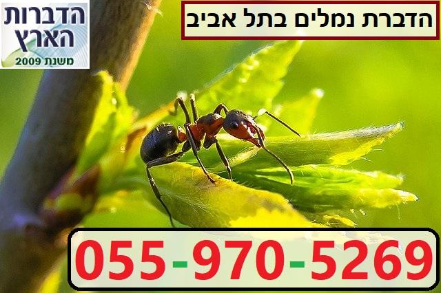 הדברת נמלים בתל אביב