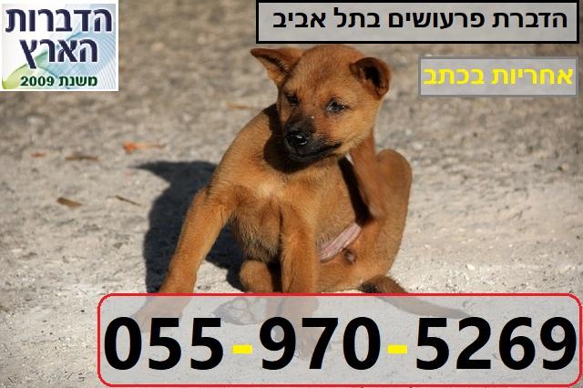 הדברת פרעושים בתל אביב