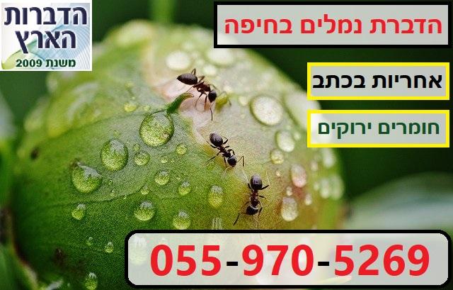 הדברת נמלים בחיפה