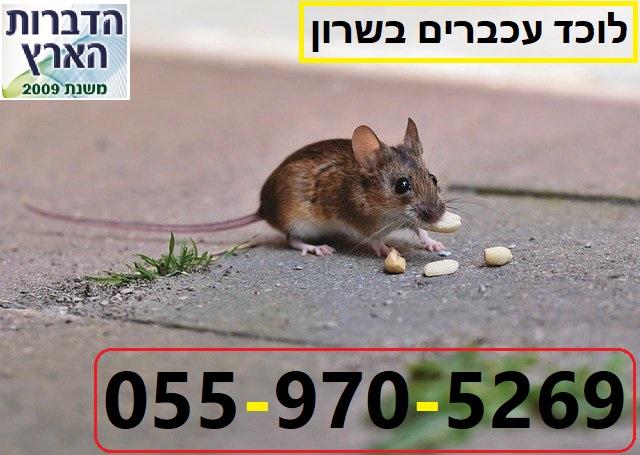 לוכד עכברים בשרון