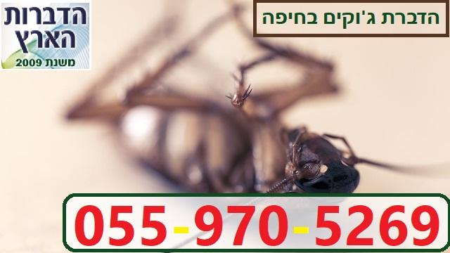 הדברת ג'וקים בחיפה